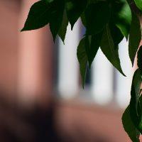 ASU's Richardson Hall with leaves