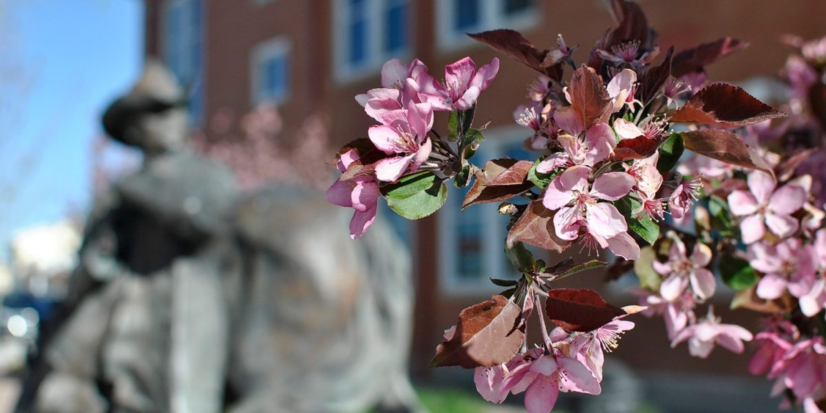 spring campus flowers