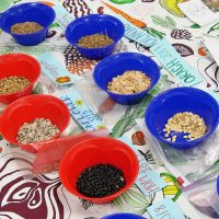 collection of seeds in brightly colored bowls