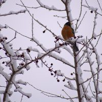 bird on snow covered tree branches